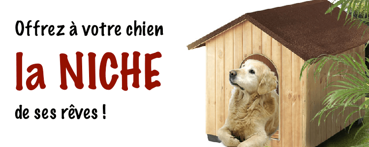 Dog niche - what to choose