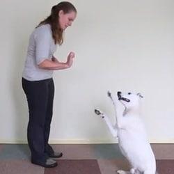 chien-langage-des-signes