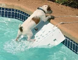 chien sortir de la piscine