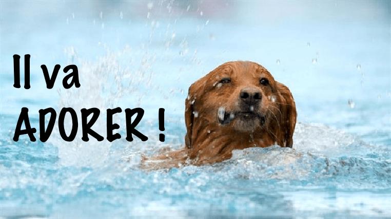 acheter une piscine pour chien guide d 39 achat et comparatif