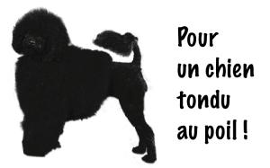 Tondeuse pour chien pour un chien au poil