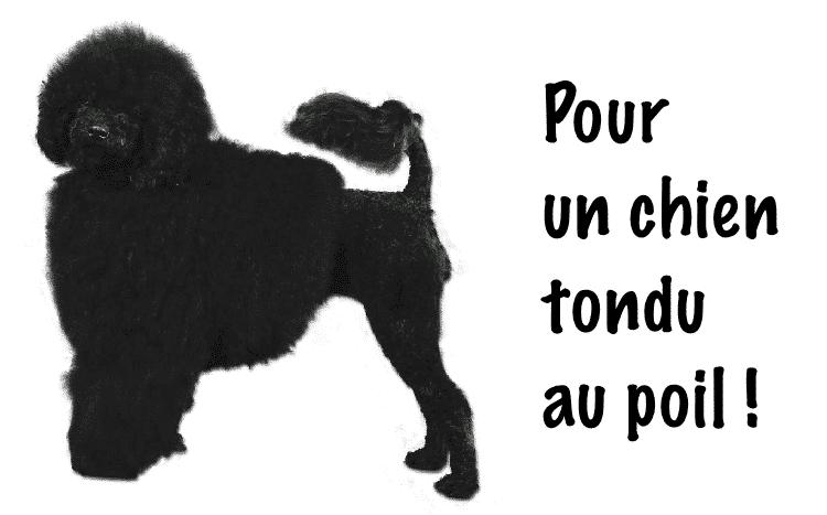 tondeuse-pour-chien-guide