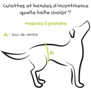 mesure couche pour chien