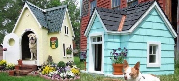 41 niches qui rendraient votre chien compl tement fou lui offreriez vous. Black Bedroom Furniture Sets. Home Design Ideas