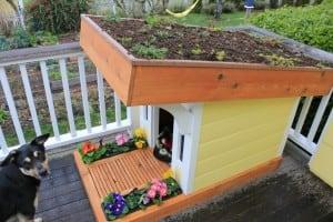 niche pour chien design avec jardin sur le toit