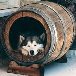 Niche pour chien tonneau