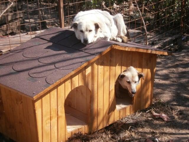 niche pour deux chiens