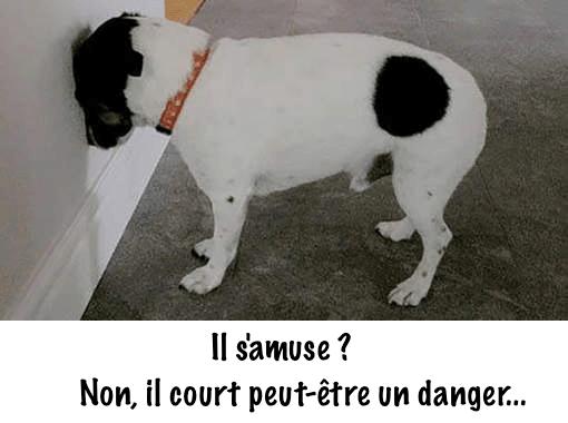 assurance pour chien obligatoire
