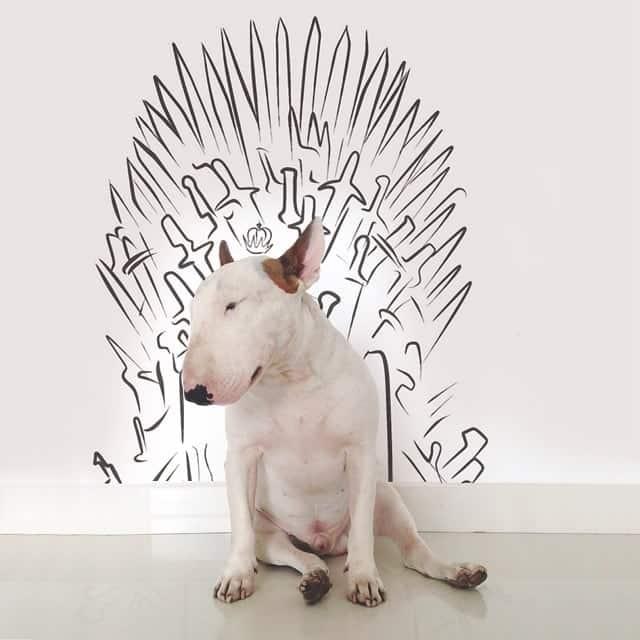 Jimmy le chien artiste