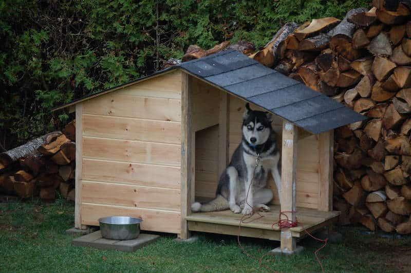 comment fabriquer cabane pour chien