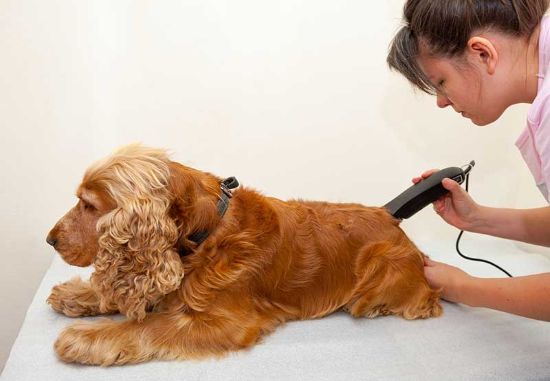 pourquoi tondre son chien