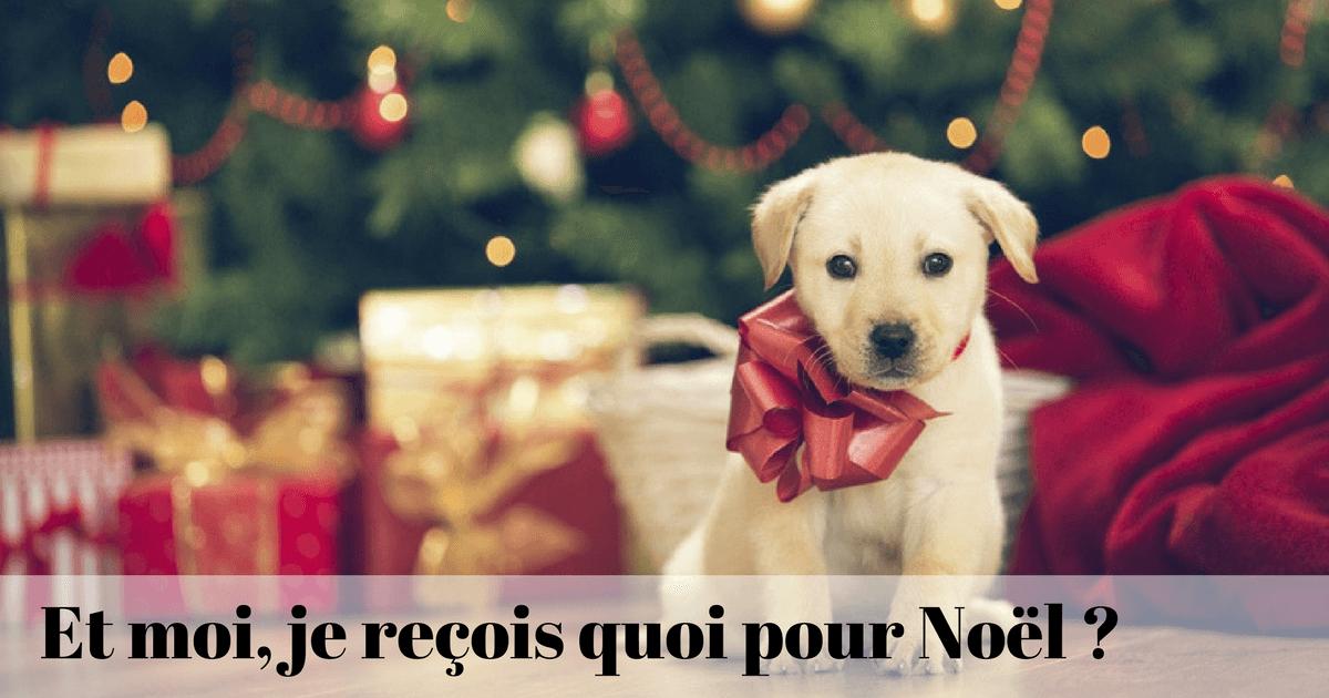 cadeau chien noel