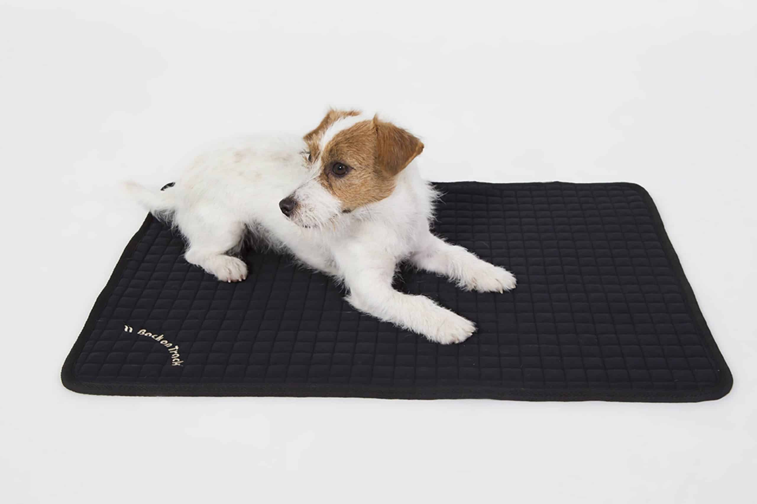 acheter un tapis pour chien solide et pas cher le guide complet. Black Bedroom Furniture Sets. Home Design Ideas