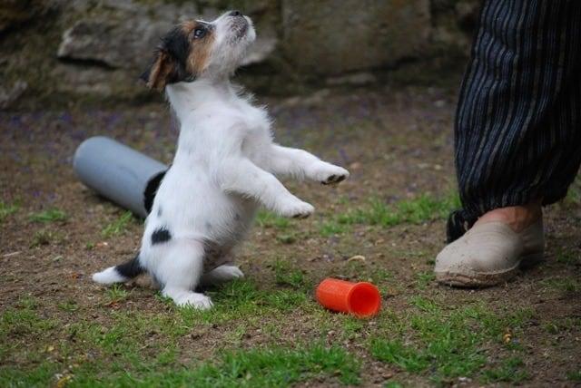 apprendre-a-son-chien-a-faire-le-beau