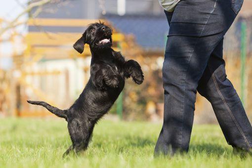site rencontre gratuit plan cul rencontre chiot et chien adulte