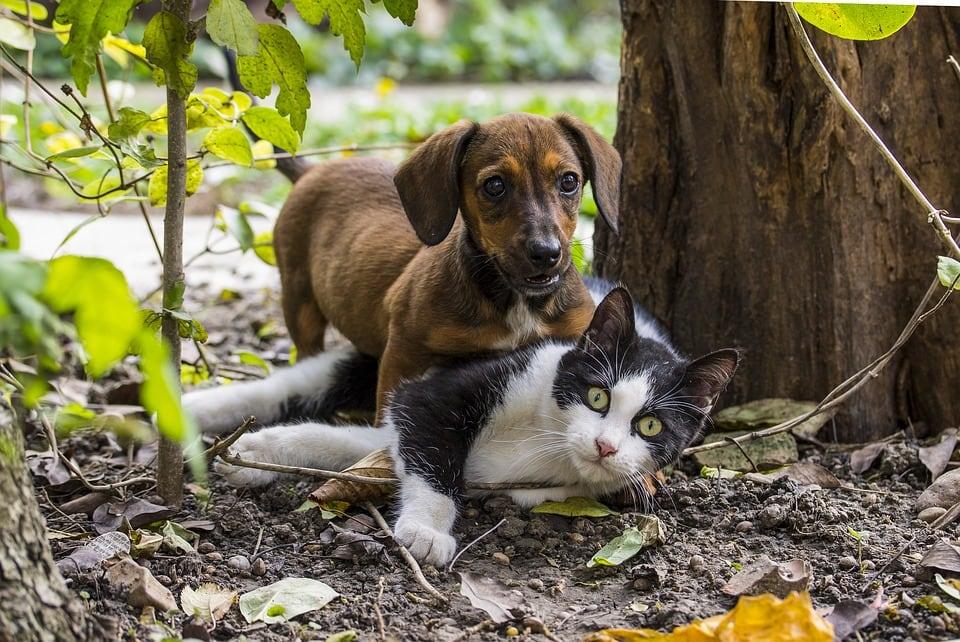 premiere rencontre chien et chaton fille cherche amitié